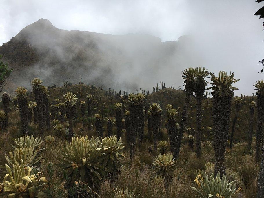 Colombia's páramo