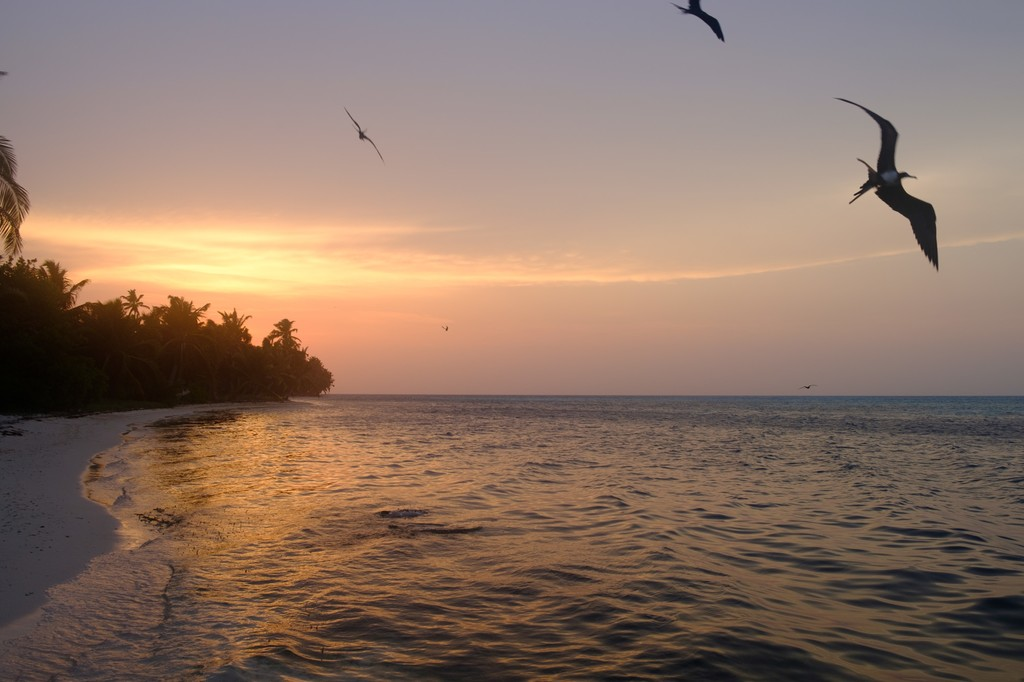 Sunset over Half moon Caye, with Frigate Bird Silhouettes