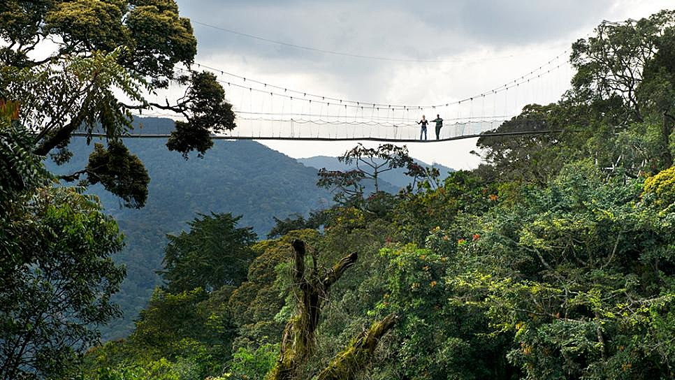 Canopy walk above the treetops