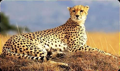 Maasai Mara Safari Game Drives
