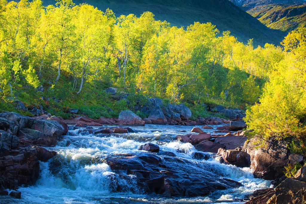 Forests and rivers on the way to Senja