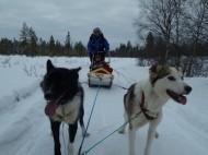 Another dog sledding tour or King Krab Safari