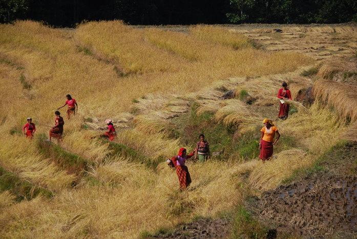 Trek to Panauti – Drive to Kathmandu and departure