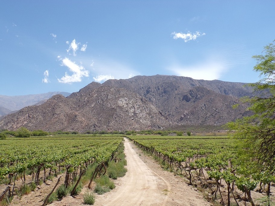 Do some wine tasting in Cafayate