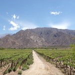 Do some wine tasting in Cafayate