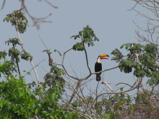 Parrot Clay Lick, Brazil Nut Trail & Camp, Mammal Clay Lick + Night Walk