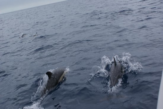 Diving or swimming with wild dolphins