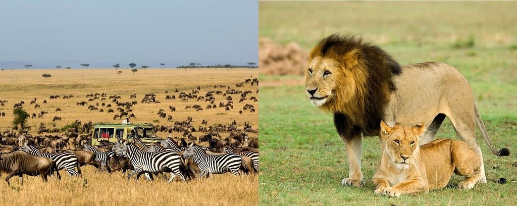 Game viewing at Serengeti National Life