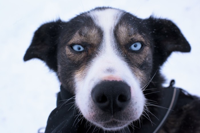 Malangen | Dogsledding