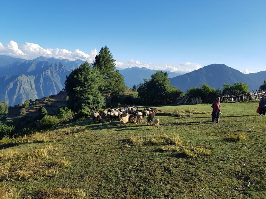 Herder of Chhepka Village