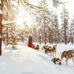 Head into the pristine Arctic wilderness with a team of huskies.