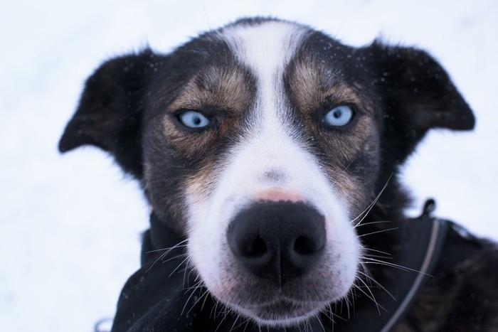 Dog sledding adventure & hunting the Northern lights