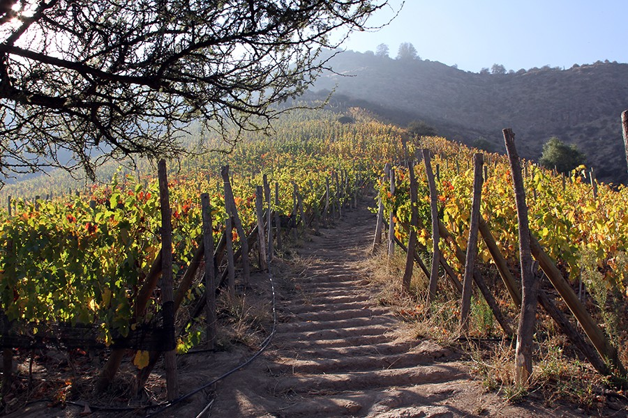 Tour the vineyards