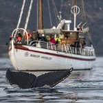 Tromsø Fjord & Wildlife Cruise