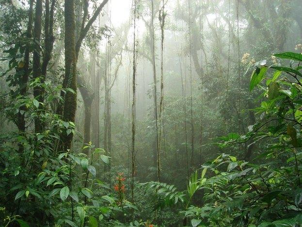 Departure to Monteverde