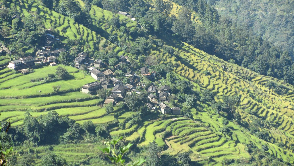 Terraced fields on today's trek