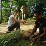 Prepare breakfast for the elephants like a mahout