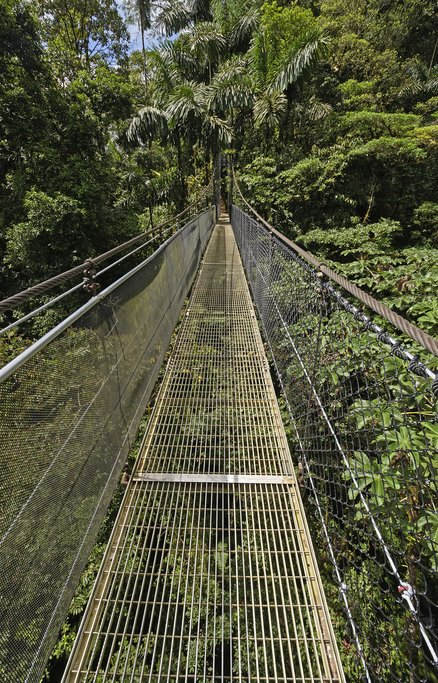 The hanging bridges at Mistico afford breathtaking views of Arenal and an astounding array of wildlife