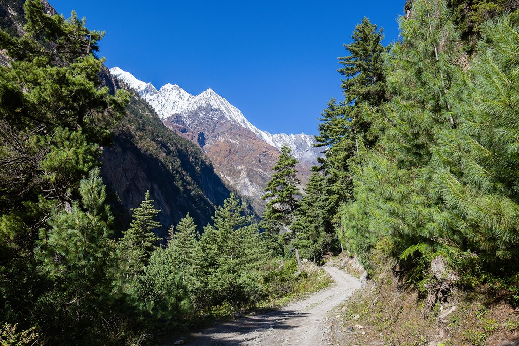 Pristine forests on the way to Pothana