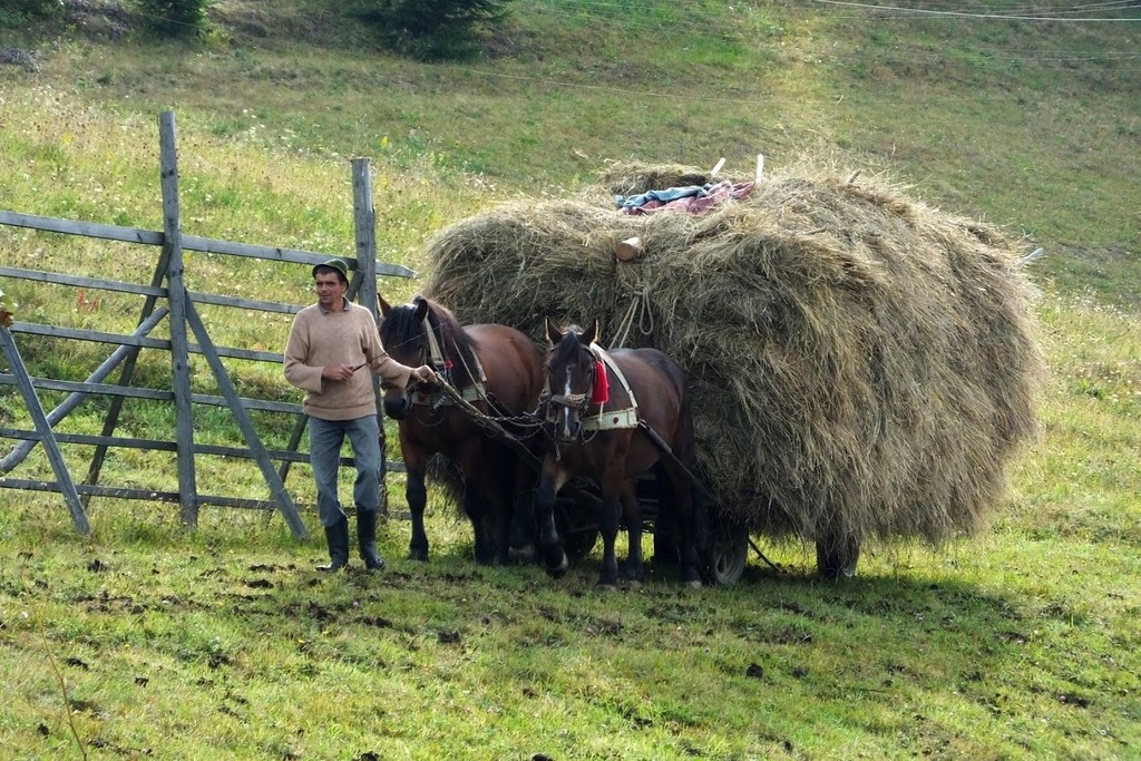 Villager taking the hay home by horse cart