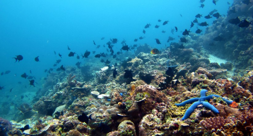 Underwater scenery at Anilao