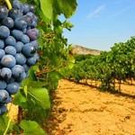 The vineyards in the Rhône Valley