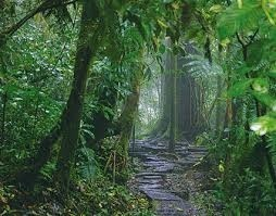 Monteverde Cloud Forest - hiking to the reserve