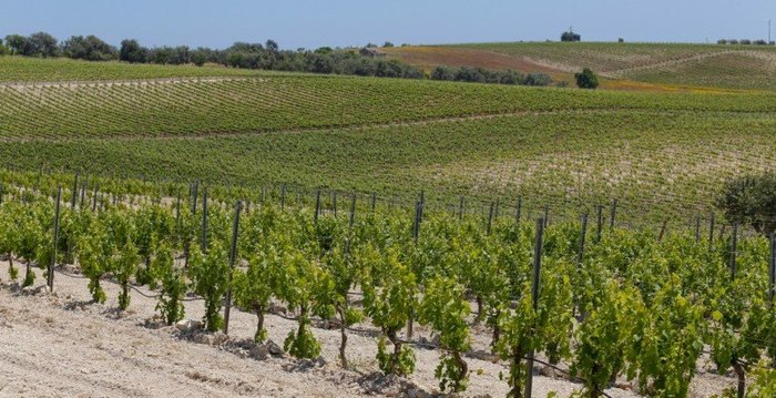 Noto's  Wine and Bike routes
