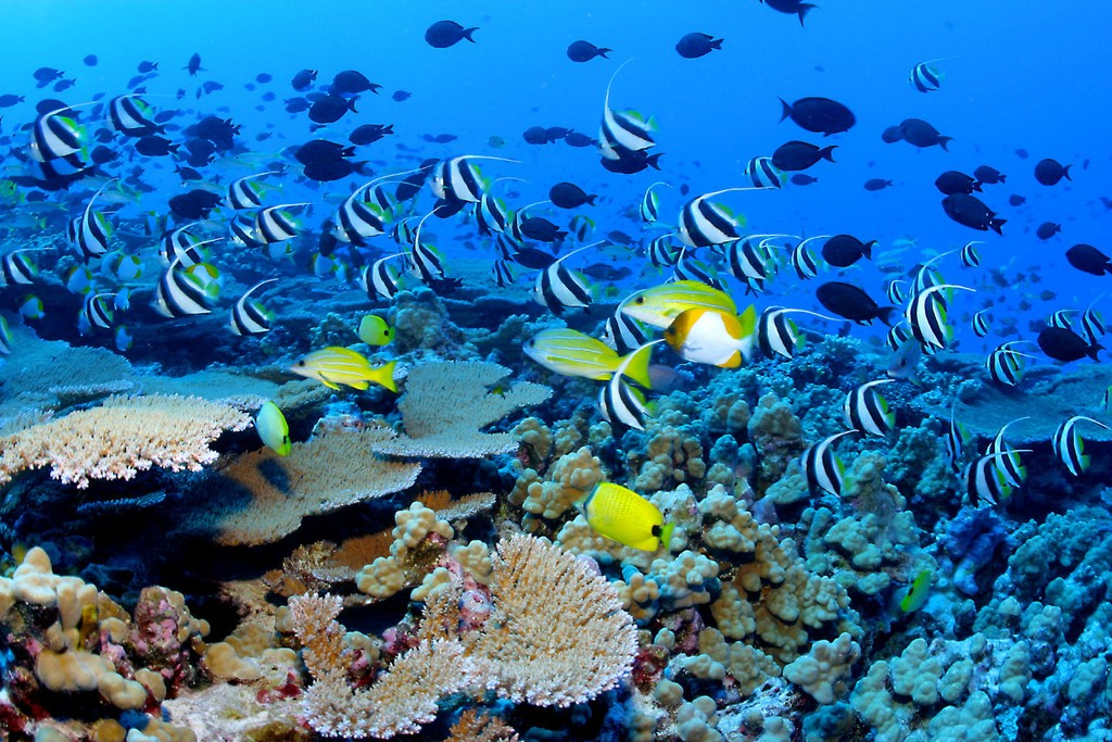 Snorkeling in Nusa Lembongan Island