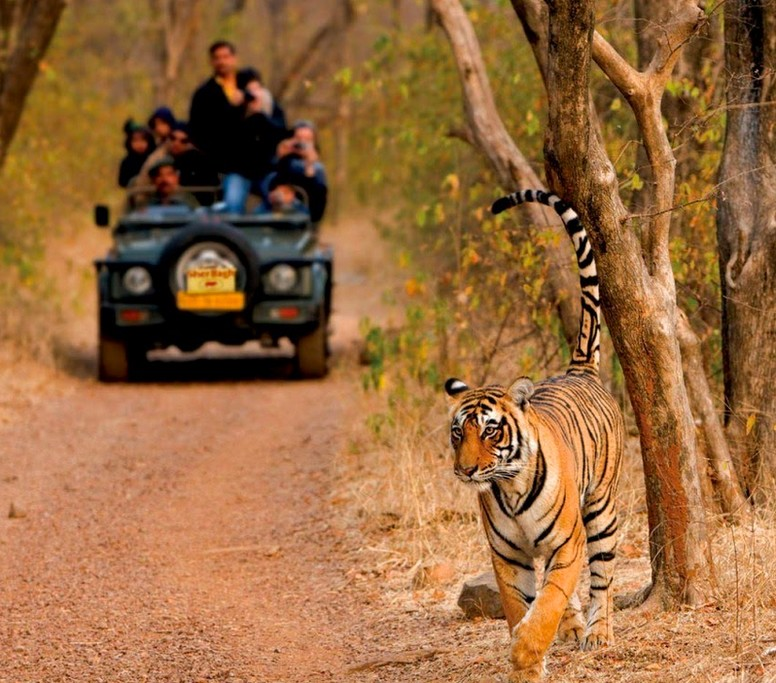 Ranthambore Safari Park