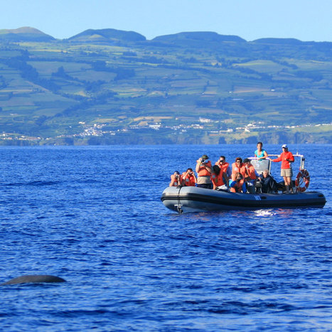 Whale and Dolphin Watching (half day tour)
