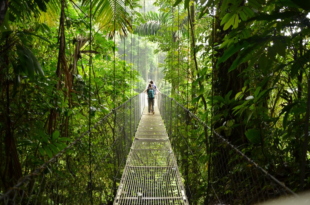 Suspension bridges in the cloud forest canopy