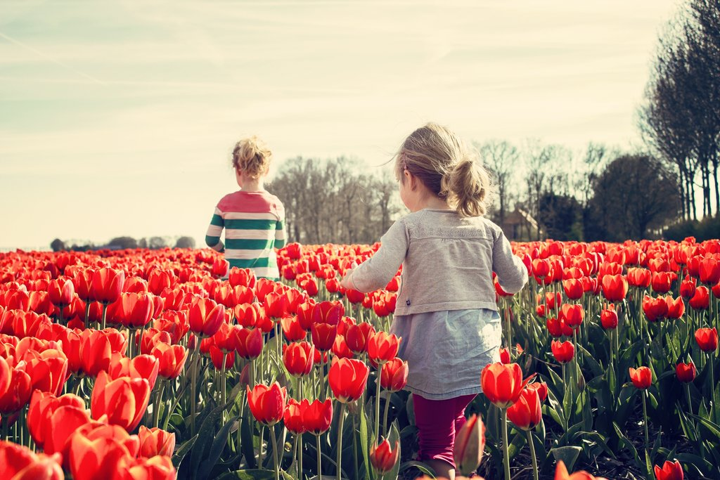 Children playing in the tulips