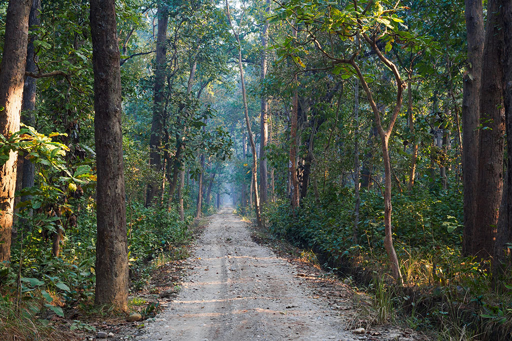 Jungle road in Bardiya